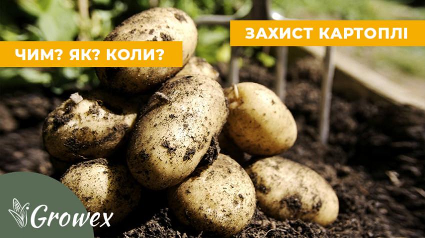 Система защиты картофеля