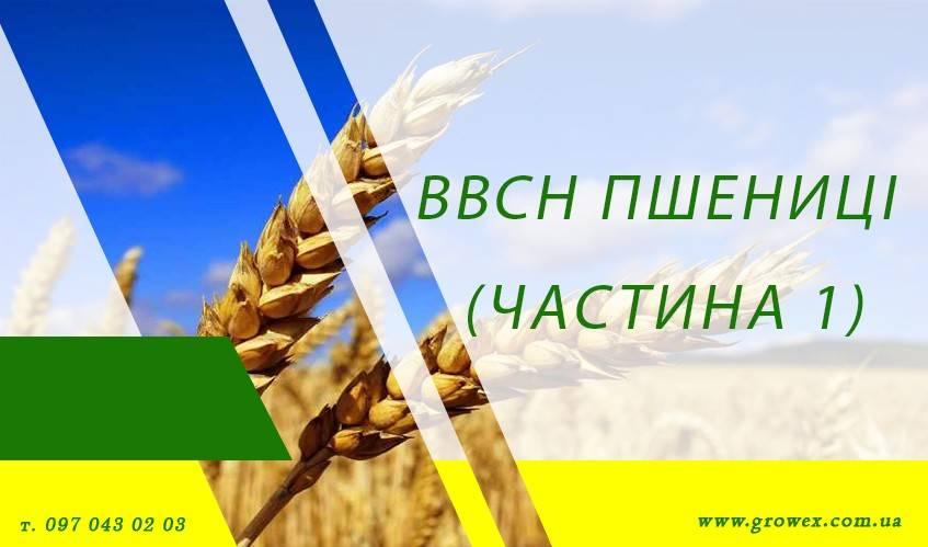 BBCH пшеницы (Часть 1)