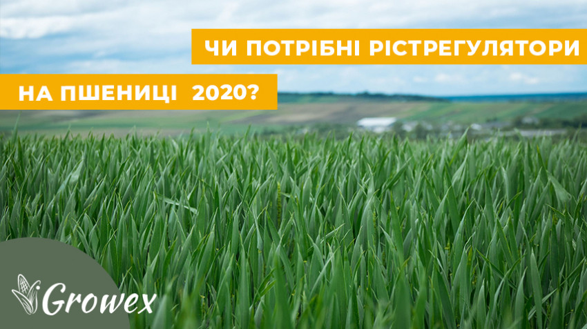Для чего регуляторы роста на зерновых?
