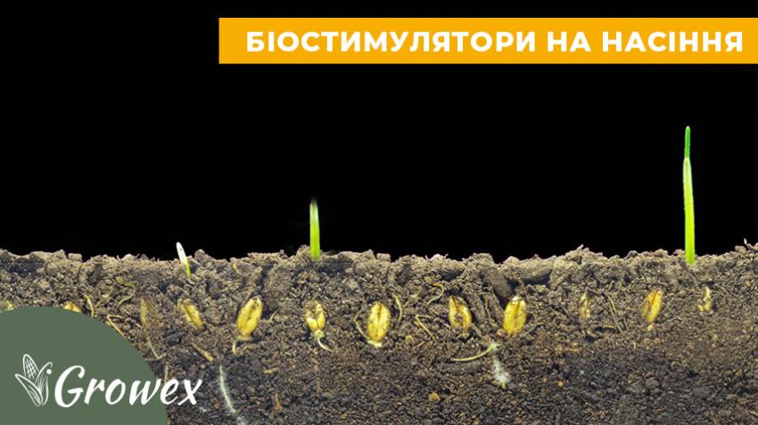 Обработка семян биостимуляторами