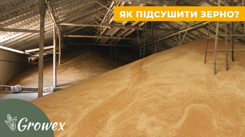 Влажное зерно. Как подсушить?