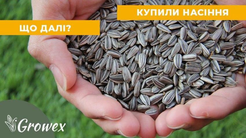 Что делать после покупки семян? Пошаговая инструкция?