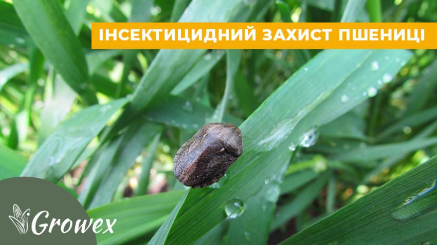 Инсектицидная защита пшеницы
