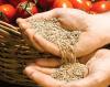 Определение массы 1000 семян