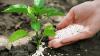 Характеристика азотных удобрений