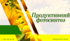 Продуктивный фотосинтез подсолнечника и кукурузы