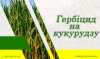 АгроНЯНЯ #13 Самый крутой гербицид на кукурузу