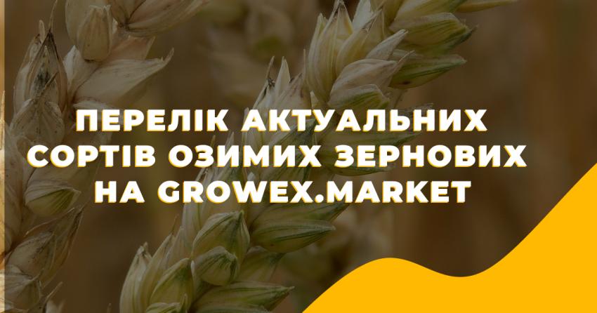 Перелік актуальних сортів Озимих Зернових на Growex.Market