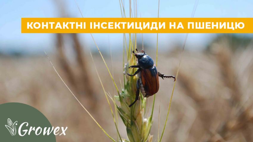 Контактные инсектициды на пшеницу