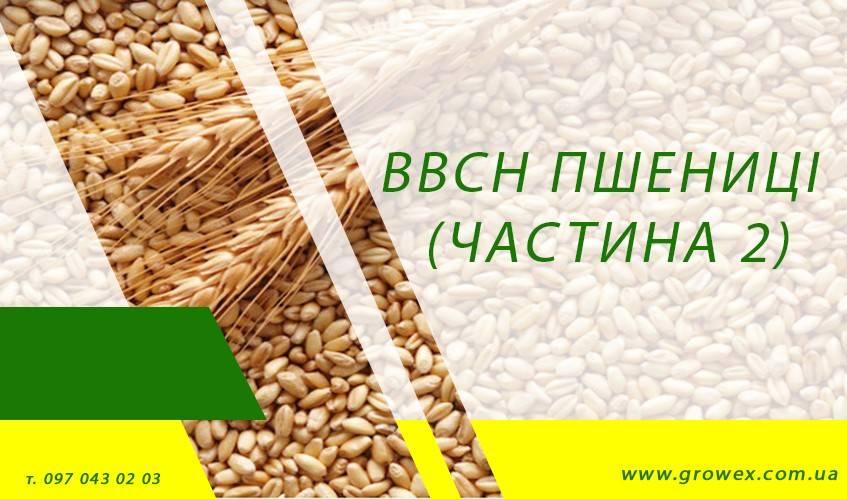 BBCH пшеницы (Часть 2)