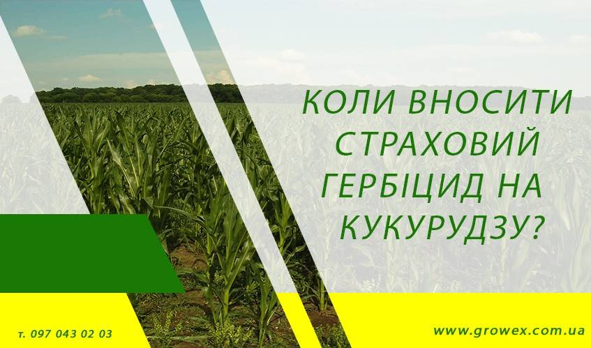 Когда вносить страховой гербицид на кукурузе?