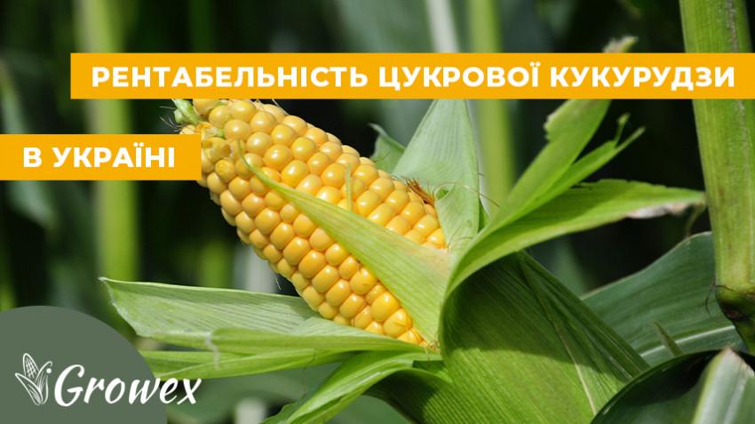 Рентабельность сахарной кукурузы в Украине