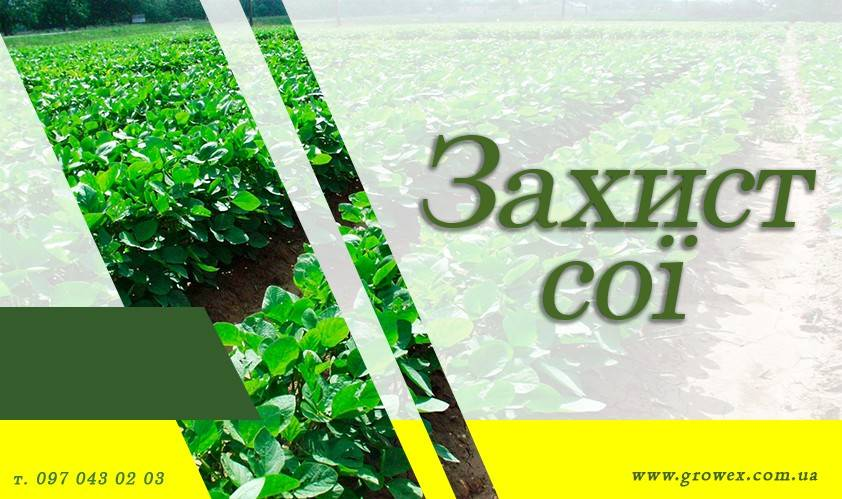 АгроНЯНЯ#6 Защита сои без Раундапа
