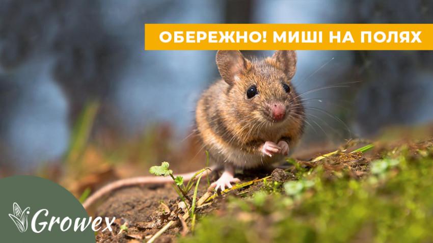 Вредоносность мышей
