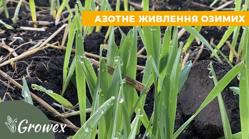Весенняя подкормка озимой пшеницы. Фазы и сроки