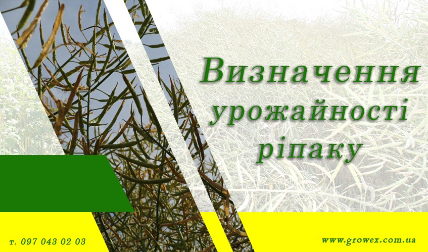 Как определить биологическую урожайность рапса?
